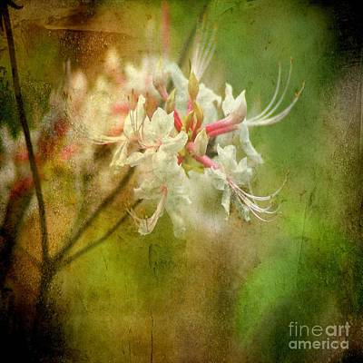 Photograph - Spring Fancies by Itaya Lightbourne