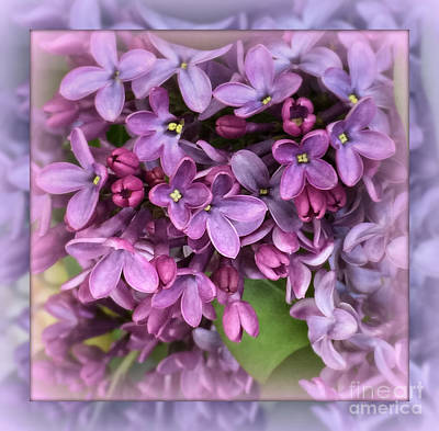 Photograph - Spring Fantasy - Lilac Purple by Miriam Danar