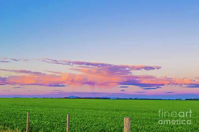 Photograph - Spring Farm by Naomi Burgess