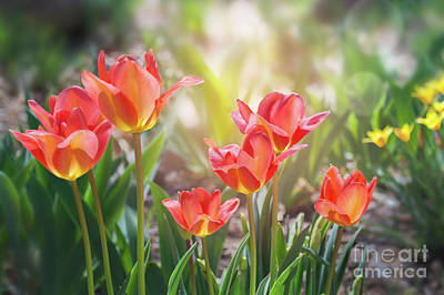 Photograph - Spring Favorites by Susan Warren
