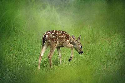 Photograph - Spring Fawn by Morgan Wright