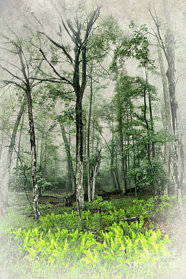 Photograph - Spring Ferns In The Blue Ridge Fx by Dan Carmichael