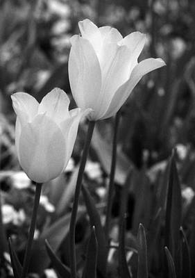Photograph - Spring Fever 19 by Pamela Critchlow