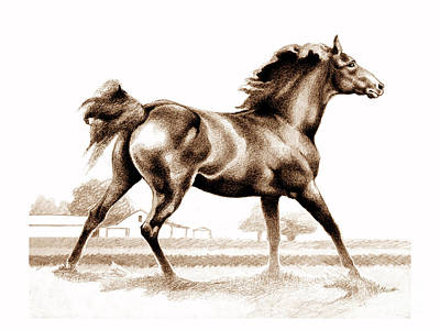 Drawing - Spring Fever Stallion 2 by Patricia Howitt