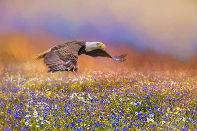 Photograph - Spring Flight Bald Eagle Art by Jai Johnson