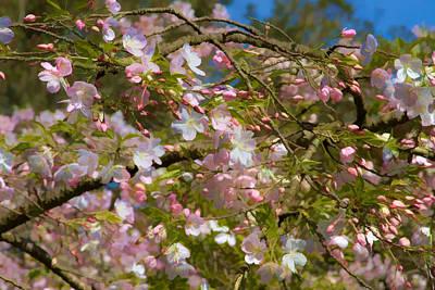 Photograph - Spring Fling by Bonnie Follett