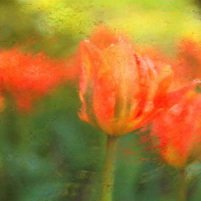 Photograph - Spring Fling by Connie Handscomb