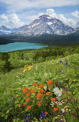 Photograph - Spring Flora // Lower Two Medicine Lake // Glacier National Park  by Nicholas Parker