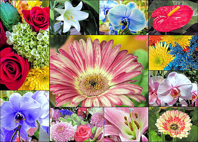 Photograph - Spring Floral Collage  by Janice Drew