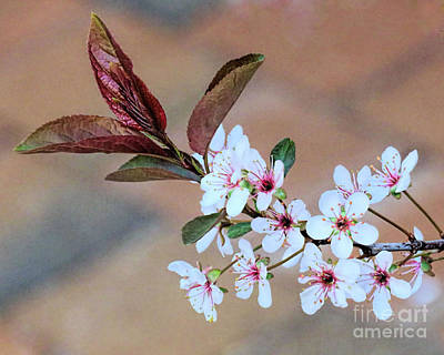 Photograph - Spring Floral by Janice Drew