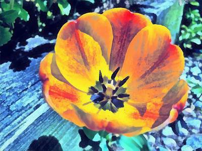 Healing Image Photograph - Spring Flower Bloom by Derek Gedney