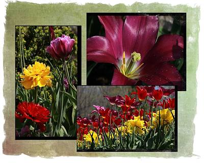 Photograph - Spring Flower Collage by Ron Grafe