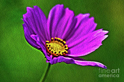 Photograph - Spring Flower by Janice Spivey