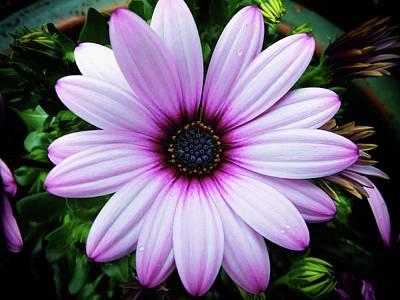 Photograph - Spring Flower by Karen Stahlros