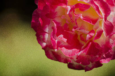 Photograph - Spring Flower Oil by Alexandre Martins