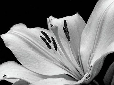 Photograph - Spring Flower by Paulo Goncalves