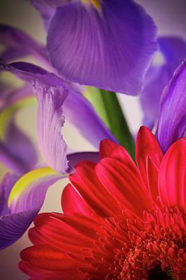 Spring Flowers 001 Art Print