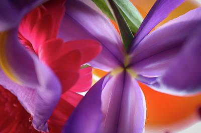 Spring Flowers 002 Art Print