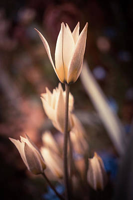 Photograph - Spring Flowers 2 by Lilia D