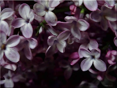 Photograph - Spring Flowers 2 by Mikki Cucuzzo