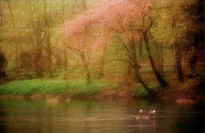 Photograph - Spring Flowers And Ducks by Emery Graham