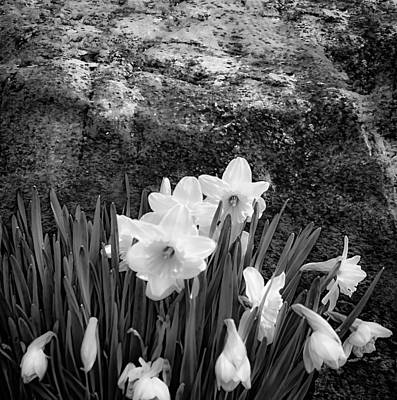Photograph - Spring Flowers And Lichen Covered Boulder - B/w 1c by Greg Jackson