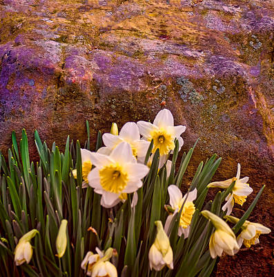 Photograph - Spring Flowers And Lichen Covered Boulder by Greg Jackson