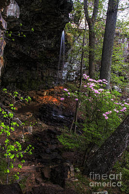 Photograph - Spring Flowers At Keon Falls by Barbara Bowen