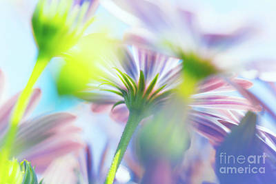 Photograph - Spring Flowers Background by Anna Om