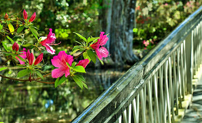 Photograph - Spring Flowers Bloom At Magnolia Plantation - Charleston Sc by Donnie Whitaker