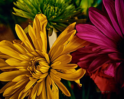 Photograph - Spring Flowers by Charles Muhle