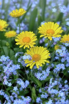 Photograph - Spring Flowers Forget Me Nots And Leopard's Bane by Henry Kowalski