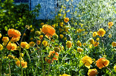Photograph - Spring Flowers In The Rain by Tamara Sushko