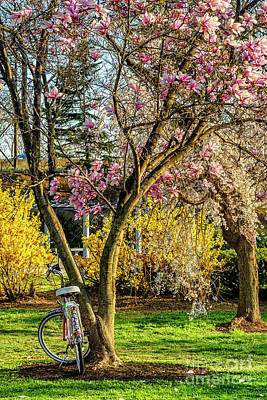 Photograph - Spring Flowers In Washington Dc by Thomas R Fletcher