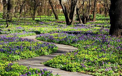 Photograph - Spring Flowers by Irina Afonskaya