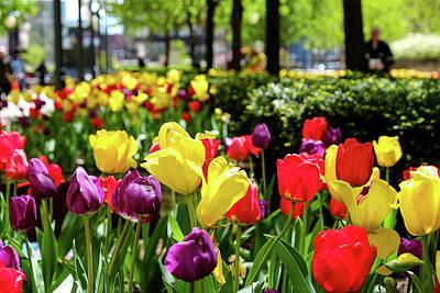 Photograph - Spring Flowers by John McArthur
