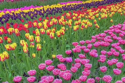 Photograph - Spring Flowers by Nadia Sanowar