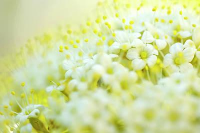 Photograph - Spring Flowers by Nailia Schwarz