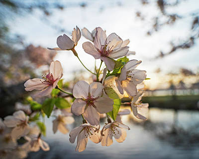 Photograph - Spring Flowers On The Charles River Esplanade Boston Ma by Toby McGuire