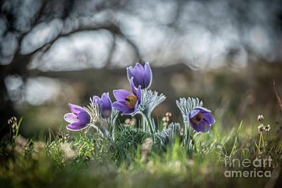 Spring Flowers Art Print by Rikard Strand