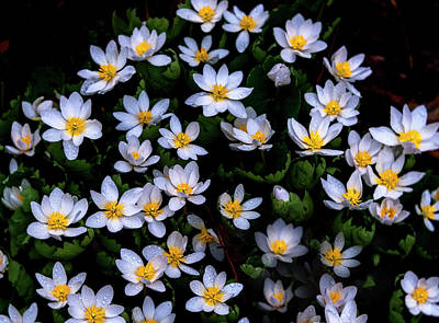Photograph - Spring Flowers by Tom Singleton