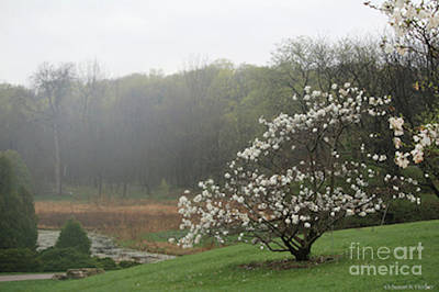 Photograph - Spring Fog by Susan Herber