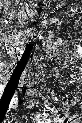 Photograph - Spring Foliage Bw 052318 by Mary Bedy