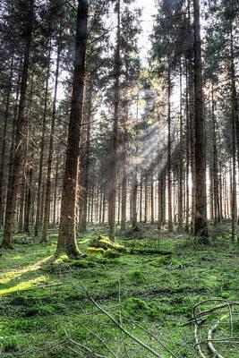 Photograph - Spring Forest Hdr B by Jacek Wojnarowski