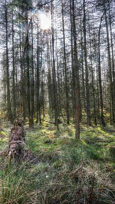 Photograph - Spring Forest Hdr by Jacek Wojnarowski