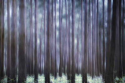 Brakes Photograph - Spring Forest by Joana Kruse
