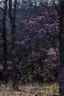 Photograph - Spring Forest by Linda Shannon Morgan
