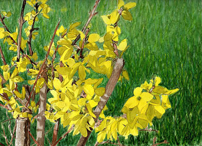 Painting - Spring-forsythia by Swati Singh