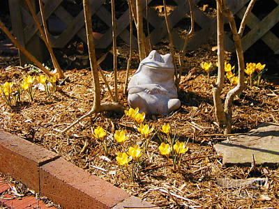 Photograph - Spring Frog by Laura Brightwood