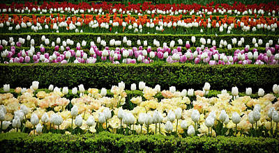 Art Print featuring the photograph Spring Garden - Colorful Tulips by Frank Tschakert